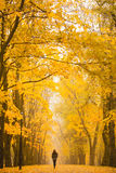 Einsame Frau, die in Park an einem nebeligen Herbsttag geht Einsame Frau, die Naturlandschaft im Herbst genießt Stockfoto