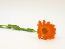 Einsame gelbe Blume Lizenzfreie Stockfotografie