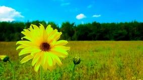 Einsame gelbe Blume auf dem Hintergrund des großen Waldes und des blauen Himmels stockfoto
