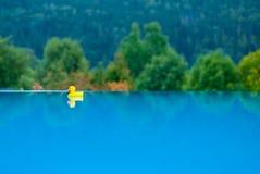 Einsame gelbe Gummiente, die in das Pool schwimmt stockbilder