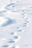 Einsame getriebene Spuren auf weißem Schnee stockfotografie