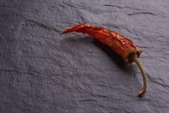 Einsame getrocknete rote Paprika-Pfeffer lizenzfreie stockfotos