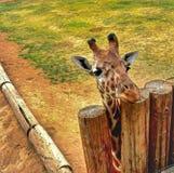 Einsame Giraffe Stockbild