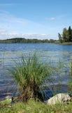 Einsame Grasscholle am Sommer stockfotos