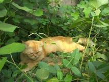 Einsame Katze Stockfotografie