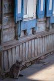Einsame Katze Stockbilder