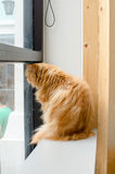 Einsame Katze Lizenzfreie Stockbilder