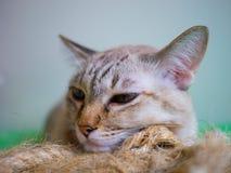 Einsame Katze Lizenzfreie Stockfotografie