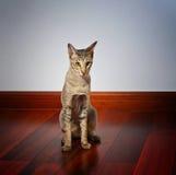 Einsame Katze, die auf hölzernem Fußboden sitzt Lizenzfreies Stockfoto