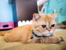 Einsame Katze im bunten Unschärfehintergrund, ausgewählter Fokus Stockbild