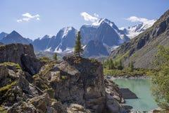 Einsame Kiefer auf dem Felsen unter den Bergen und dem See Stockfotografie