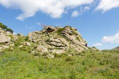 Einsame Kiefer auf einem Hintergrund von grünen Bergen Lizenzfreie Stockfotografie