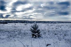 Einsame kleine Kiefer auf einem schneebedeckten Gebiet Lizenzfreie Stockfotos