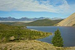 Einsame Lärche auf einem Hintergrund von See Stockfoto