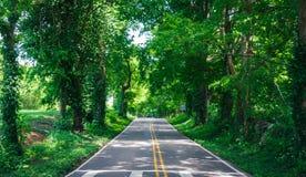 Einsame Land-Straße im Sommer mit Baum-Überdachung Stockfotografie