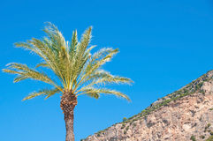 Einsame Palme auf dem Berg Stockfoto