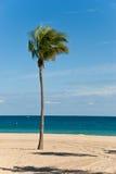 Einsame Palme an einem windigen, sonnigen Tag Lizenzfreie Stockfotos