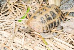 Einsame Schildkröte Lizenzfreies Stockbild