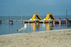 Einsame Seemöwe auf dem Ufer des Schwarzen Meers Lizenzfreies Stockfoto