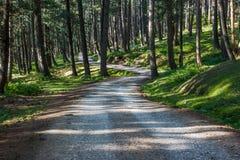 Einsame Straße durch dichten Kiefernwald Stockfotografie