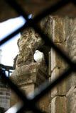 Einsame Taube, die im Gebäude Zuflucht sucht lizenzfreie stockfotos