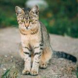 Einsame, traurige, obdachlose nette Tabby Gray Cat Kitten Pussycat stockfoto