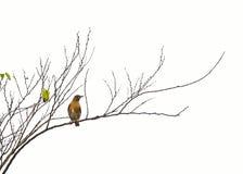 Einsame Vögel Stockfotos