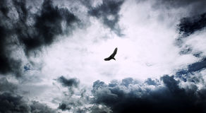 Einsame Vogelfliege im Himmel Stockfotos