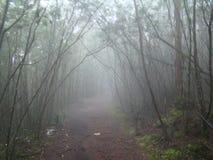 Einsame Weise umfasst im Nebel Stockfotografie