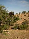 Einsame Ziege, die auf einer Niederlassung steht Stockfoto