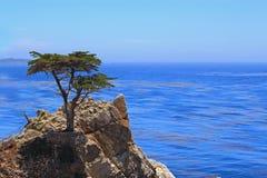 Einsame Zypresse Stockbild