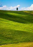 Einsame Zypresse Stockfoto