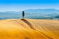 Einsame Zypresse in Toskana stockfotos