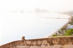Einsamer Affe auf Dachspitzenbalkon auf dem Berg, der Bucht und der Stadt Lizenzfreies Stockfoto