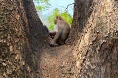Einsamer Affe, der allein sitzt Stockfotografie