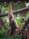 Einsamer Affe, der im Käfig am Zoo sitzt Stockfotos