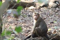 Einsamer Affe die wild lebenden Tiere Stockbild