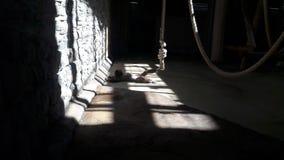 Einsamer Affe hinter Gittern im Zoo Stockfotografie