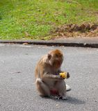 Einsamer Affe im Wald Lizenzfreies Stockfoto