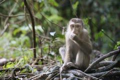 Einsamer Affe im Wald Lizenzfreie Stockfotos