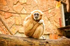 einsamer Affe sitzt auf einem Baum Stockbild