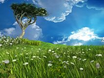 Einsamer Akazienbaum Stockfotos