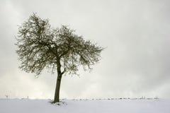 Einsamer appel Baum lizenzfreies stockfoto