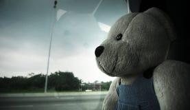Einsamer Bär Stockbilder