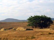 Einsamer Banyanbaum Lizenzfreies Stockfoto