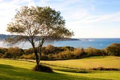 Einsamer Baum über dem Meer Lizenzfreies Stockbild