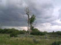 Einsamer Baum lizenzfreie stockbilder