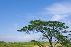 Einsamer Baum. Stockfotografie
