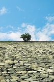 Einsamer Baum. stockbilder