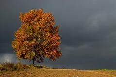 Einsamer Baum Lizenzfreie Stockfotos
